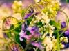 Wildkräuter und -blüten